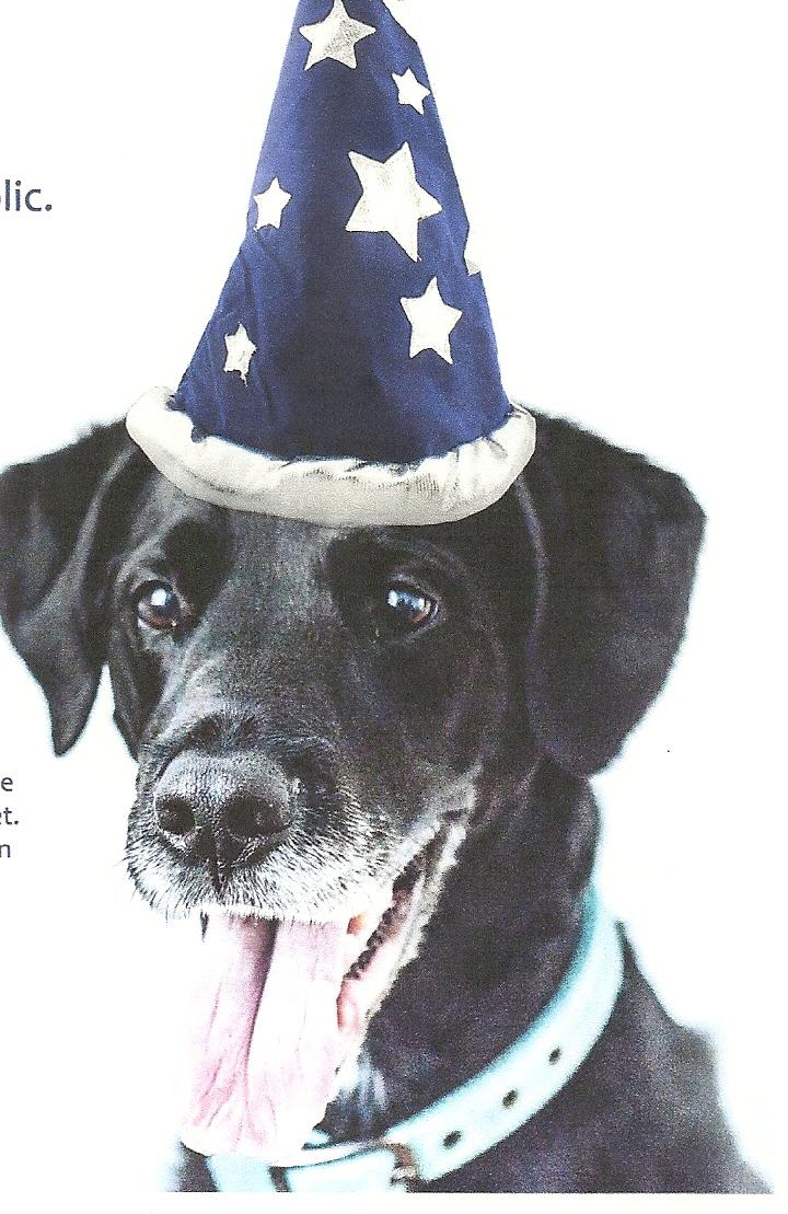 Doggie Parade & Contest